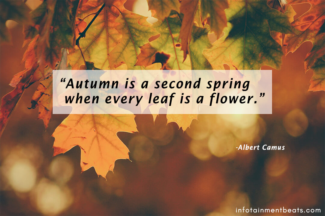 Albert-Camus-quote-about-autumn-season