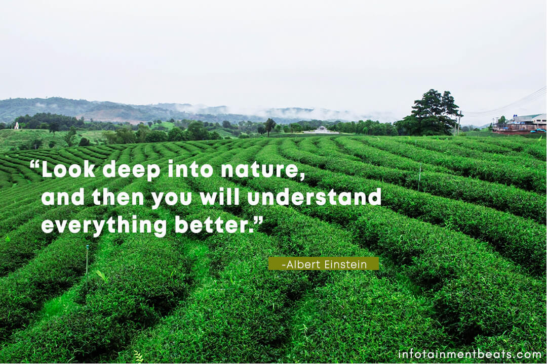 Albert-Einstein-deep-into-nature