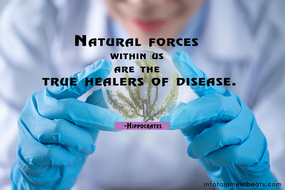 Hippocrates-quote-about-true-healers-of-disease