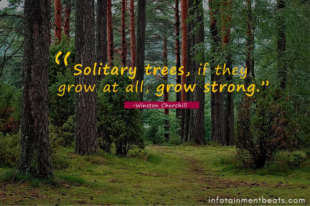 Winston-Churchill-solitary-trees
