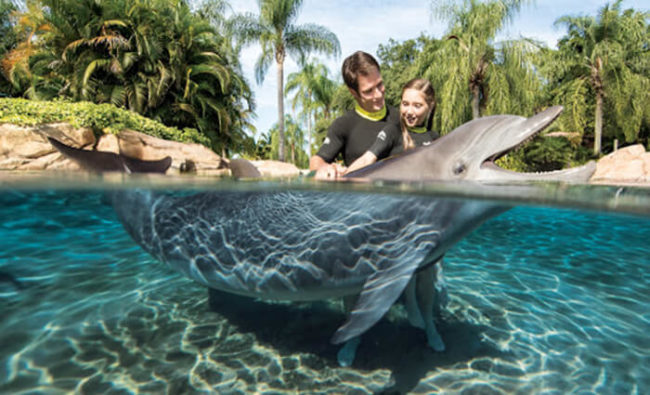 discovery cove orlando pictures