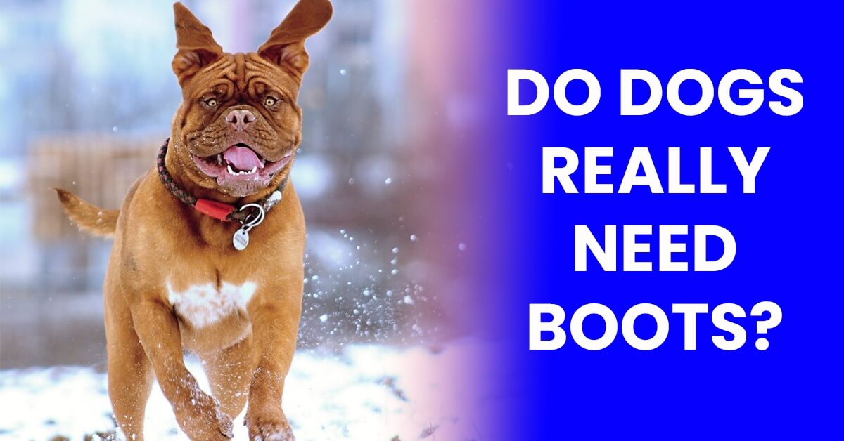 Do Dogs Really Need Boots?